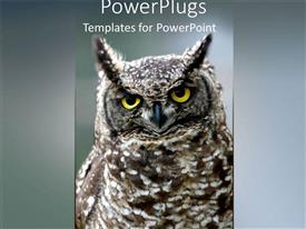 PowerPlugs: PowerPoint template with a large brown and white colored owl with ash background