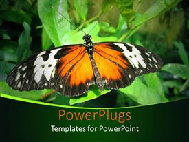PowerPoint template displaying large butterfly resting on the green leaf of a plant