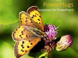 PPT featuring a large butterfly resting on a purple flower with blurry background