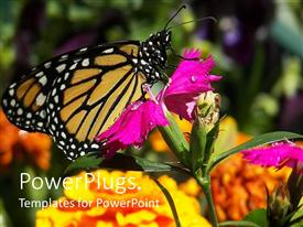 PowerPlugs: PowerPoint template with a large butterfly resting on a wide purple flower