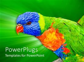 PowerPoint template displaying a large colorful bird with a bright green shinning background