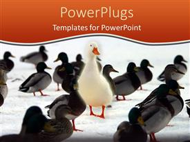 PowerPlugs: PowerPoint template with large distinct white bird stands out from the crowd