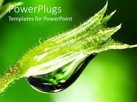 PowerPlugs: PowerPoint template with large green plant with clear water droplet on it