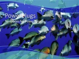 PowerPlugs: PowerPoint template with large group of swimming fishes in blue water underwater life