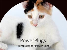 PowerPlugs: PowerPoint template with large hairy black and white cat with black background