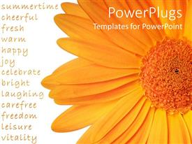 PowerPlugs: PowerPoint template with a large orange colored flower on a white background