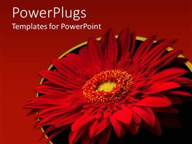 PowerPoint template displaying large red flower with red and black colored background