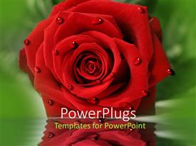 PowerPlugs: PowerPoint template with large red rose flower with droplets of water on it