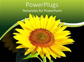 PowerPlugs: PowerPoint template with large sun flower with a green and black background