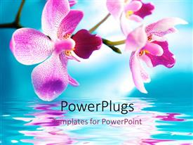 PowerPlugs: PowerPoint template with lavender orchids over reflective water against blue sky background