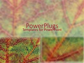 PowerPlugs: PowerPoint template with a leaf closeup with its reflection in the background