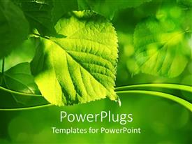 PowerPlugs: PowerPoint template with a leaf with a number of leaves in the background