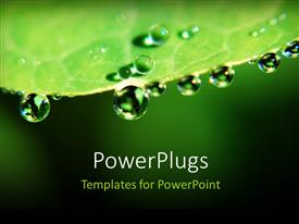 PowerPlugs: PowerPoint template with a leaf with a number of water droplets