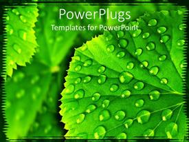 PowerPoint template displaying a leaf with water droplets along with its reflection in the background