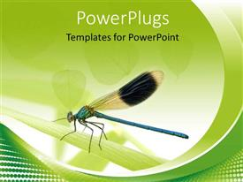 PowerPoint template displaying leaves on white background with close-up of fly perching on leaf