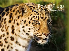 PowerPoint template displaying leopard face with blurred green background, animal