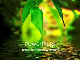 PowerPlugs: PowerPoint template with light shinning on beautiful green leaves with reflection on water surface