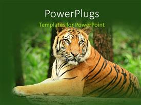PowerPoint template displaying a lion in the jungle with trees in background