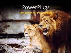 PowerPlugs: PowerPoint template with a lion with a lioness and place for text