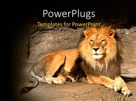 PowerPoint template displaying a lion with stones in the background and place for text
