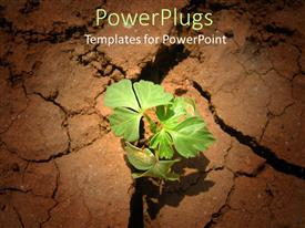 PowerPlugs: PowerPoint template with little green plant growing from arid field with cracks in it