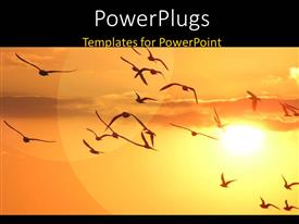PowerPlugs: PowerPoint template with a lot of birds in the air and a sun in the background