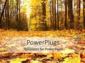 PowerPlugs: PowerPoint template with a lot of fallen leaves with trees in the background