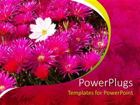 PowerPlugs: PowerPoint template with a lot of flowers with pinkish background