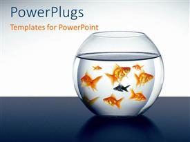 PowerPlugs: PowerPoint template with a lot of goldfish swimming in the aquarium