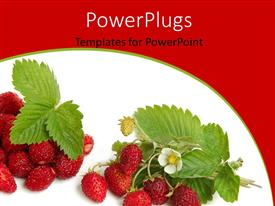 PowerPlugs: PowerPoint template with a lot of strawberries with white background and place for text