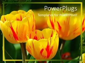 PowerPlugs: PowerPoint template with a lot of yellow flowers with greenish background