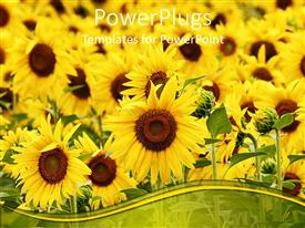 PowerPlugs: PowerPoint template with lots of beautiful sun flowers with grass of a field