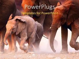 PowerPlugs: PowerPoint template with lots of elephants walking on a dusty dry road