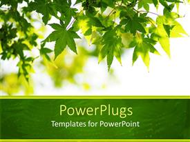 PowerPlugs: PowerPoint template with lots of fresh green leaves hanging from a tree