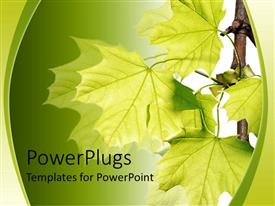 PowerPlugs: PowerPoint template with lots of leaves on a branch on a green colored background