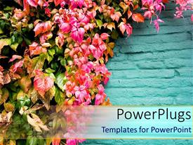 PowerPlugs: PowerPoint template with lots of pretty pink flowers handing on a blue fence