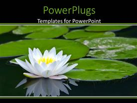 PowerPlugs: PowerPoint template with lots of sea leaves and  white water Lilly on a pond