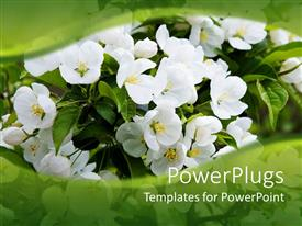 PowerPlugs: PowerPoint template with lots of small white flowers on a green background