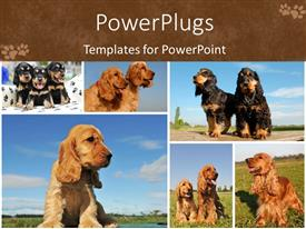 PowerPlugs: PowerPoint template with lots of tiles showing cute puppies playing on grass