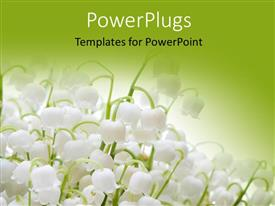 PowerPlugs: PowerPoint template with lots of white colored lily flowers on a green background