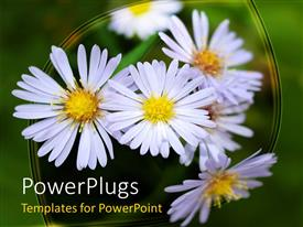 PowerPoint template displaying lots of white flowers blossoming on a green background