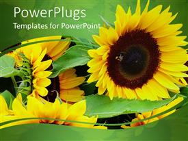 PowerPlugs: PowerPoint template with lots of yellow sun flowers on a green background