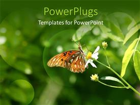 PowerPlugs: PowerPoint template with a lovely colorful butterfly perching on a yellow flower