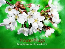 PowerPlugs: PowerPoint template with lovely white and yellow flowers with blurry green background