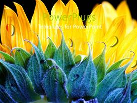PowerPoint template displaying lovely yellow and green flower on  black colored background