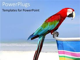 PowerPlugs: PowerPoint template with macaw perches on chair handle sitting on beach with clear blue sky