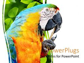 PowerPoint template displaying a macaw sitting on peacefully with a stick in its beak