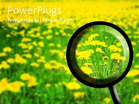 PowerPlugs: PowerPoint template with magnifying glass searching through flower field in spring