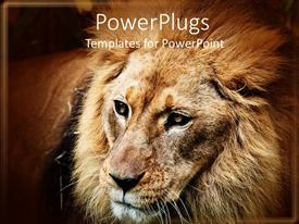 PowerPlugs: PowerPoint template with male adult Lion with full mane on a brown background