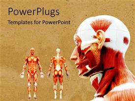 PowerPoint template displaying male muscles on the human body in anatomy on a neutral background